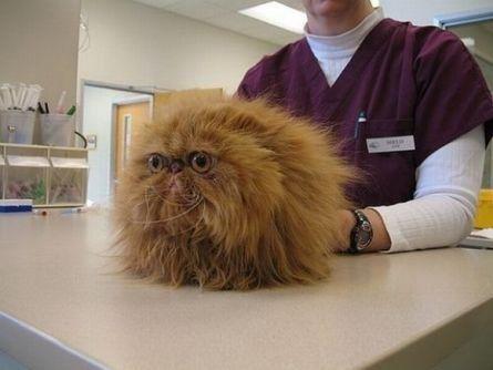Lustige Katze beim Tierarzt