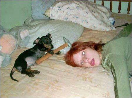 Hund haut Frauchen mit Hammer um