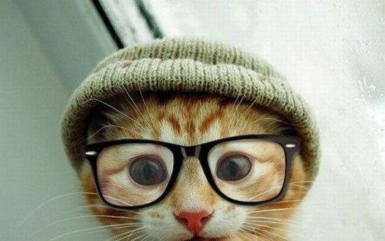 Lustige Katze trägt Mütze und Brille