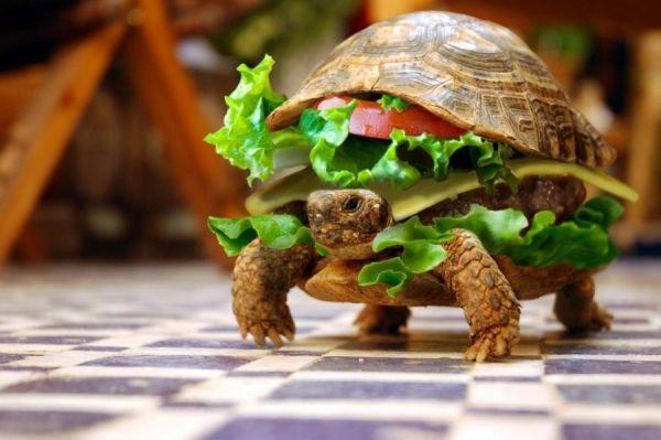 Der Schildkröten-Hamburger