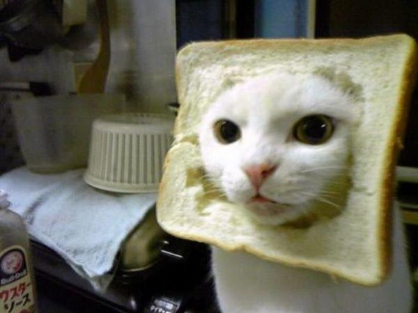 Katze hat ihr Gesicht im Toastbrot